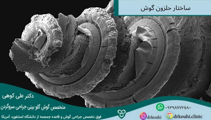 ساختار حلزون گوش انسان